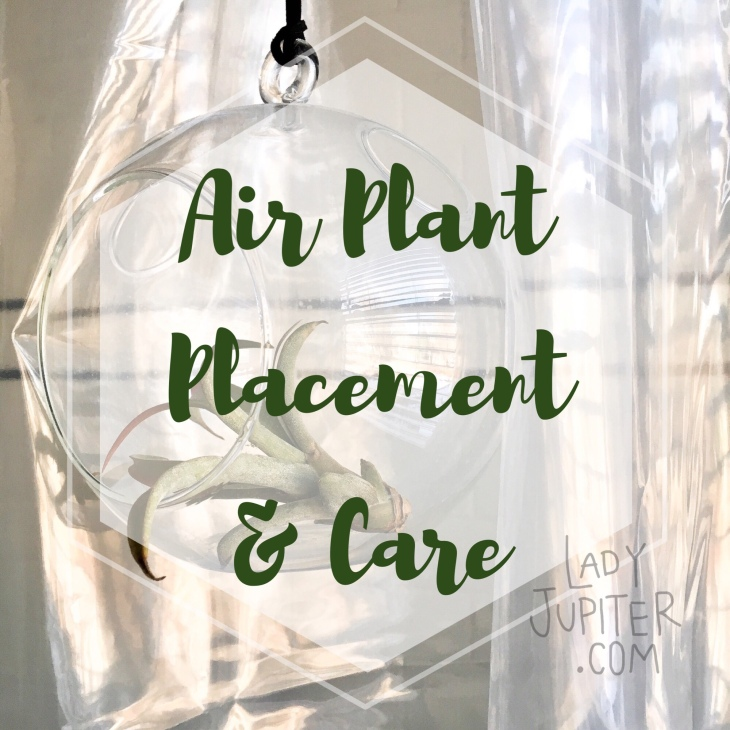 Air Plant Placement + Care #milspouse #milblogger #airplants
