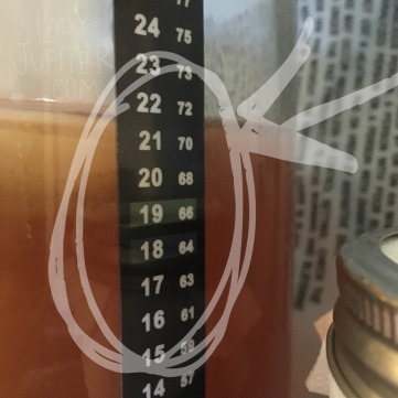 Brewing kombucha in the winter, and increasing heat for a healthy SCOBY #kombucha #homebrew #winter