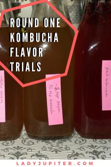 Kombucha Saga has progressed to flavor trials, success! #kombucha #experiments #milblogger