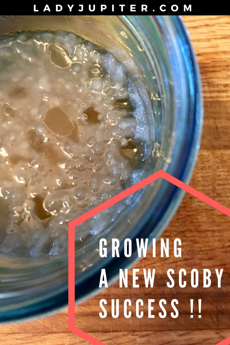 Lady Jupiter makes a SCOBY from store-bought kombucha, AND starts a continuous brew with a purchased SCOBY #homebrew #kombucha #milblogger